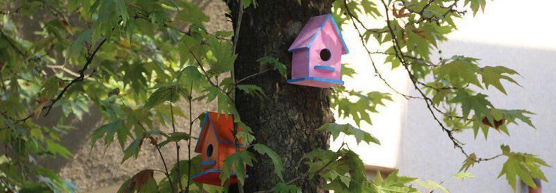تُرک ها معماری باستان را به لانه های پرندگان آوردند ، پرندگان لاهیجان هم صاحب خانه های رنگی می شوند